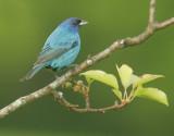 Birds -- Virginia, May 2012
