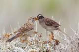 Birds -- Monterey Bay, August 2012