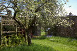 Apple Trees and Ancient Places