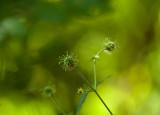 summer greens 685