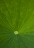 basic green 432
