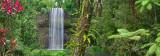 Milla milla rainforest waterfall