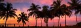 Port douglas sunset palm silhouette