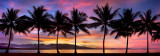 Port douglas sunset silhouette pano