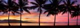 Port douglas sunset palm silhouette close