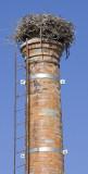 stork chimney Lagos centre.jpg