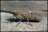 DSCF6098 Insekt Järvafältet.jpg