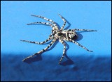 P4270011 Spider 27 april 2012.jpg