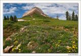 Alpine Meadow, Engineer Mountain, San Juan National Forest, Colorado, 2011