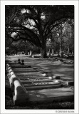 Untitled #12, Glenwood Cemetery, Houston