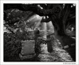 Untitled #13, Glenwood Cemetery, Houston