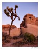Untitled 2, Joshua Tree National Park, California, 2012