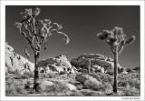 Untitled 3, Joshua Tree National Park, California, 2012