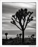 Untitled 4, Joshua Tree National Park, California, 2012