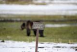 Yellowstone spring 2011
