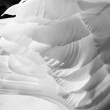 Steinauer Swan Wing.jpg