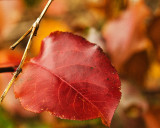 12/4/2011 - Nature's Colorsds20111204-0056aw.jpg
