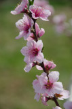 3/23/2012 - Early Blossomsds20120323-0009w.jpg