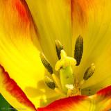 5/08/2012 - Tulip Confidentialds20120506-0200w.jpg