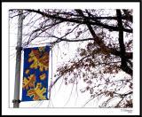 ds20051108b_0043a1wF Street Banner.jpg