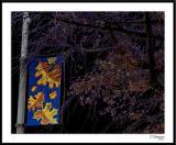 ds20051108b_0043a2wF Street Banner.jpg