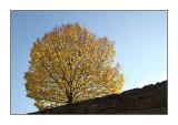 Autumn in Monschau