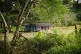 Rainforest housing