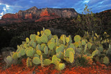 PRICKLY PEAR FOREGROUND S352.jpg