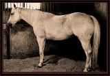 HORSE IN SEPIA ROUGH