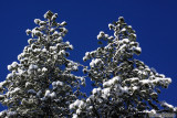 Magalia-DeSabla-Stirling City snow - Feb. 20, 2011