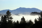 VIew from our rental house - fog lifting in Forestville