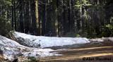 Stubborn snow drift along Humboldt Road on June 26