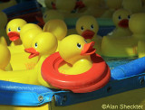 Rubber ducks on the midway