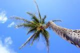 Maui, Hawaii, May 31 - June 6, 2012