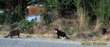 Cat neighborhood, Noyo Harbor