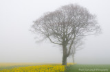 One Foggy Morning In Spring.jpg