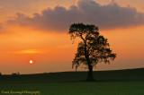The Rising Sun.jpg