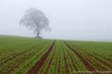 One Misty Morning In Spring.jpg