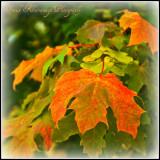 Autumn Is On It's Way.jpg