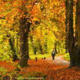 Autumn In Kilkenny.jpg