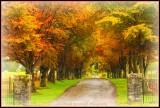 Autumn Avenue.jpg