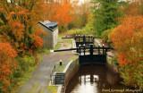 Autumn's Last Display.jpg