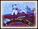 Seasons Greetings To All My PBase Friends..jpg