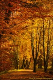 Autumn Gold.jpg
