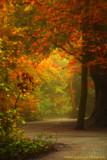 A Path Through A Magical Forest.