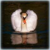 A Majestic Bird