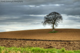 A Freshly Ploughed Field