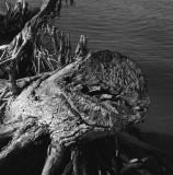 Dead tree at the riverside III