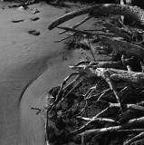 Dead tree at the riverside I