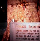 Dikke Boom